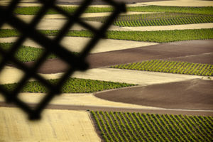 campo-paisaje-vino